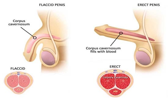Erectile Dysfunction PRP